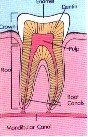 Figure A. Diagram of a healthy tooth